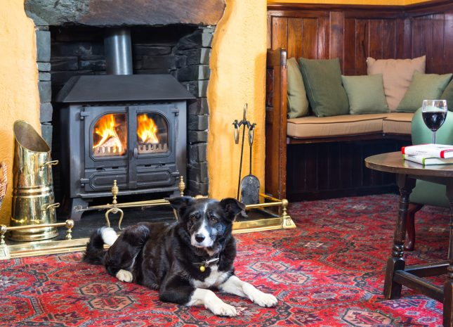 Dogs are welcome in the King's Head, Thirlmere (short drive from Keswick)