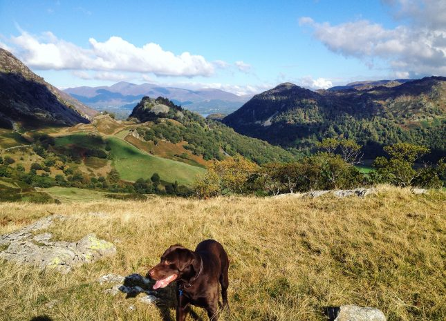 Enjoy spectacular views in Borrowdale with your dog!